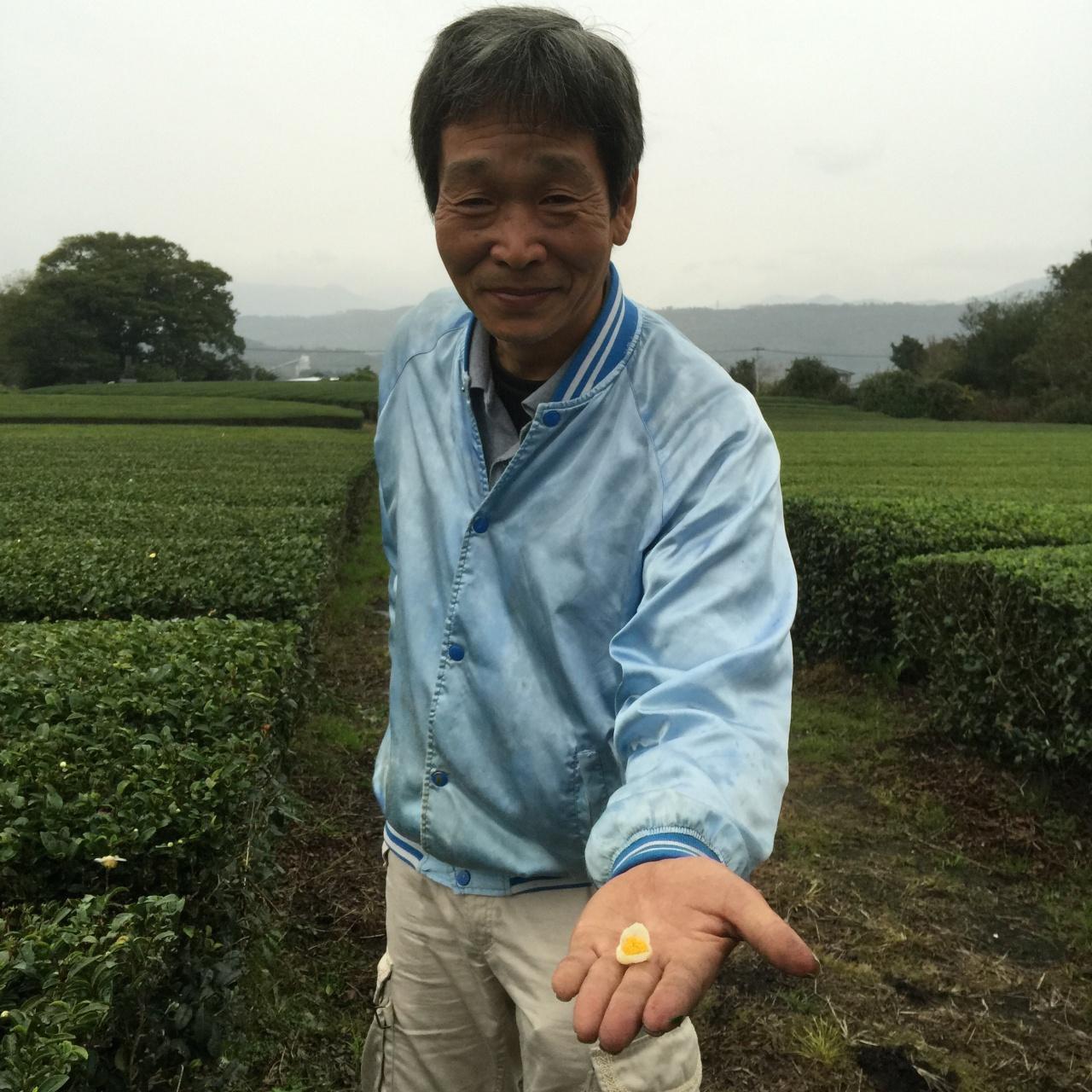 чай Миядзаки камача
