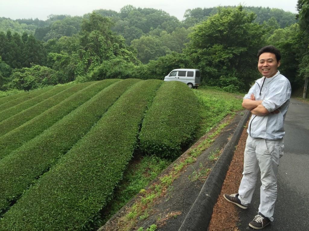 зелёный чай аоянаги