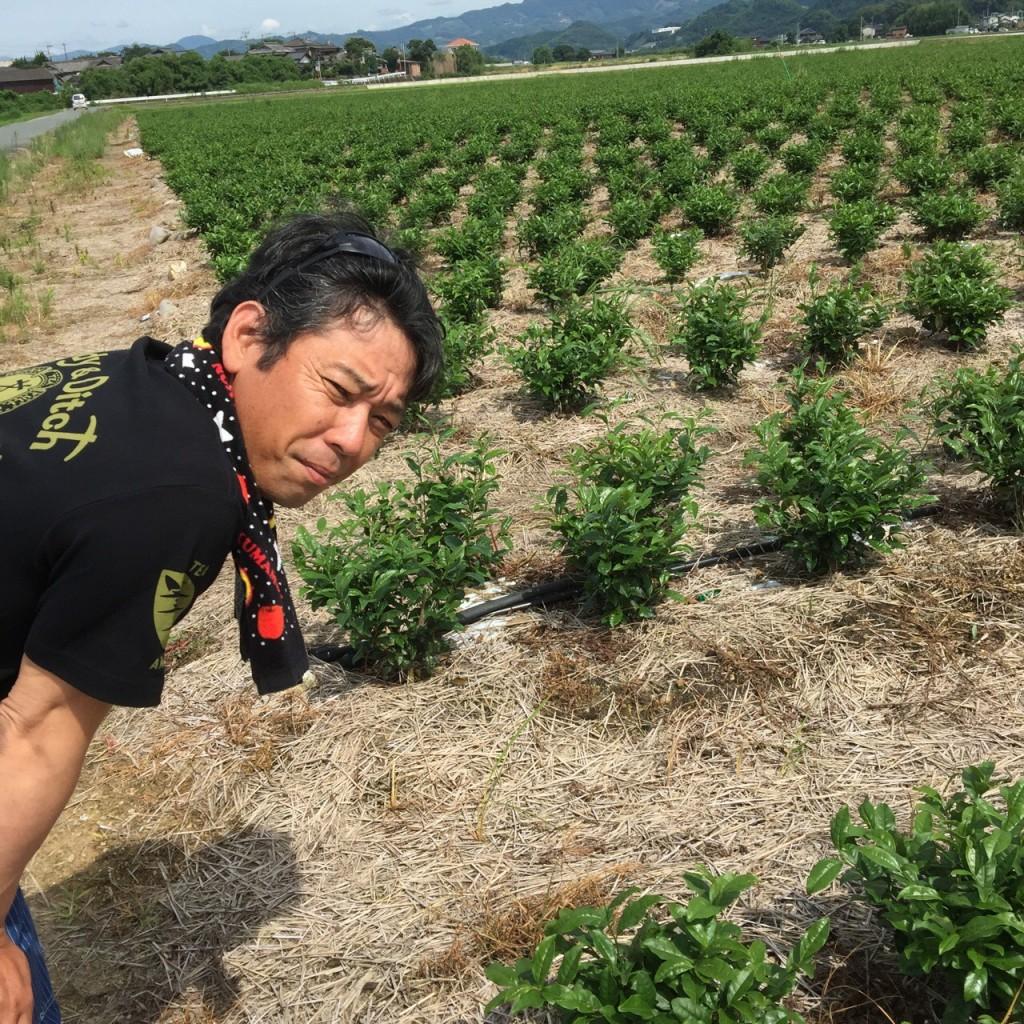ямэ сенча из Ямэ Фукуока