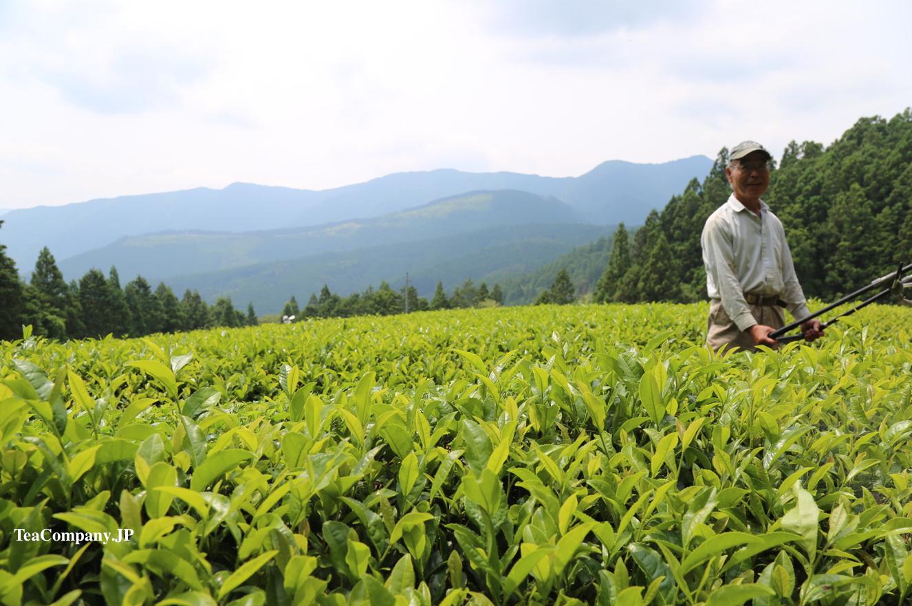 органический зелёный чай