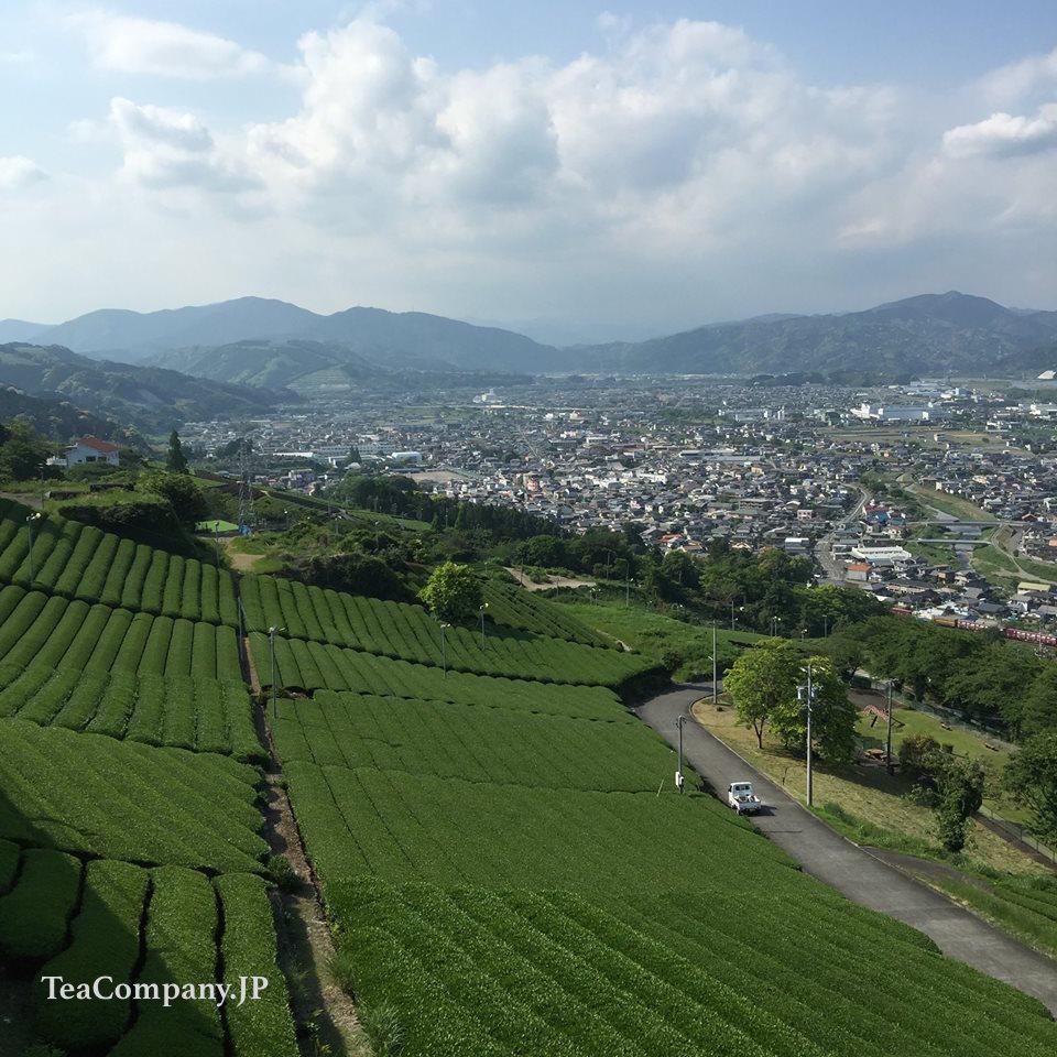 чайные плантации Макинохара Сидзуока