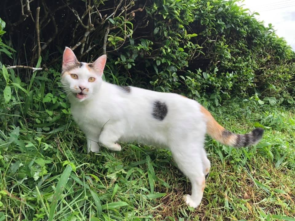 чайный кот из миядзаки